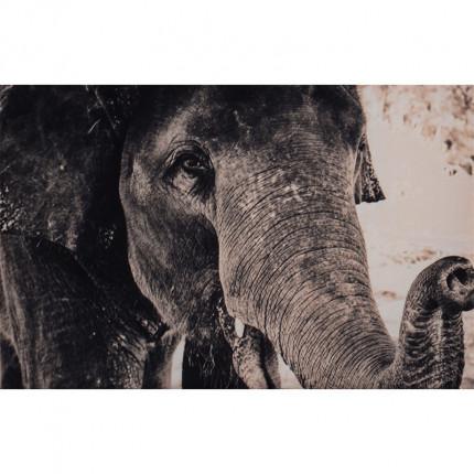 Obraz drukowany na płótnie słoń MHD0-02-04