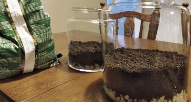 Jak zrobić las w słoiku? Kaktusy i sukulenty